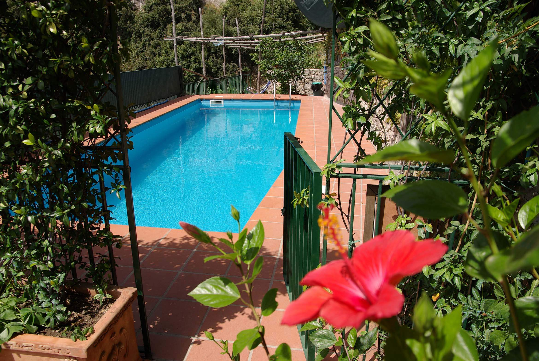 large pool flower