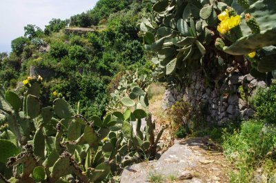 Hike Madonnina St. Elia path with cactus